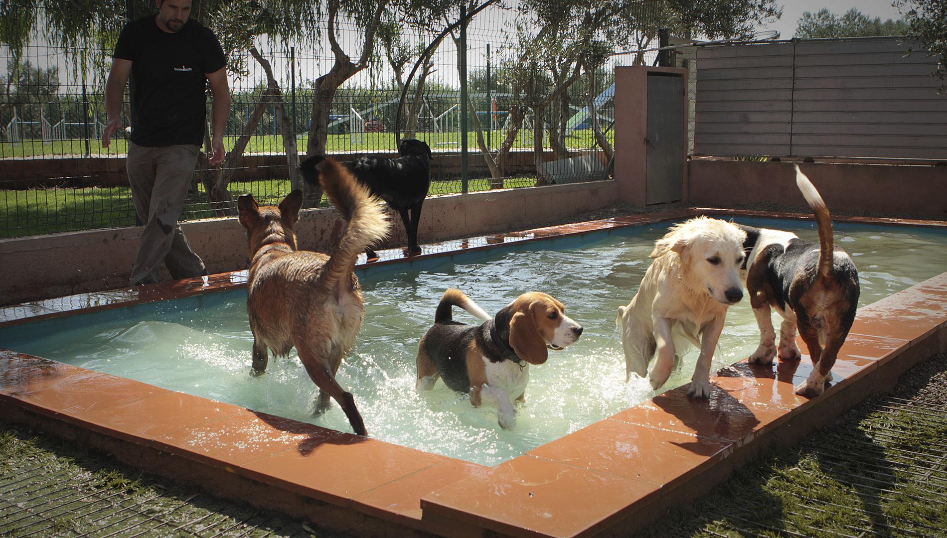 Mascotas Costa Brava